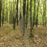 Сетка ДФЛ для лесничеств